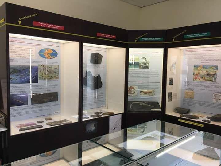 Il Museo Intelvese dei Fossili