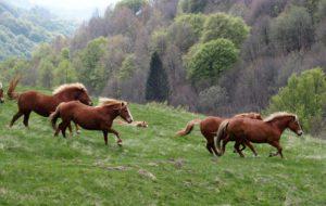 I cavalli del Bisbino