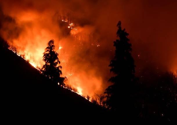 Incendio Martica: insieme per rinascere dal fuoco